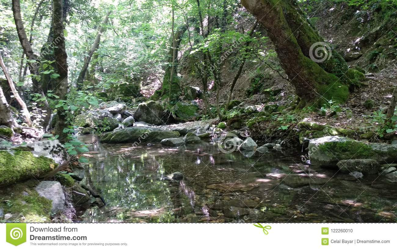 Download Walk in the forest stock photo. Image of glenchurch - 122260010