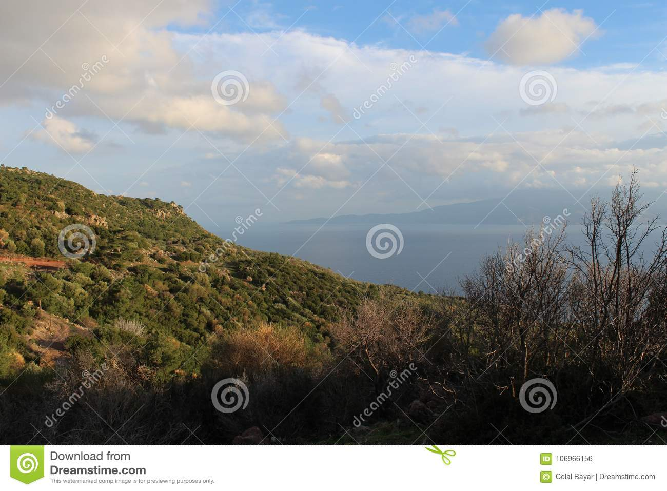 Download Walk in the forest stock photo. Image of radar, forest - 106966156