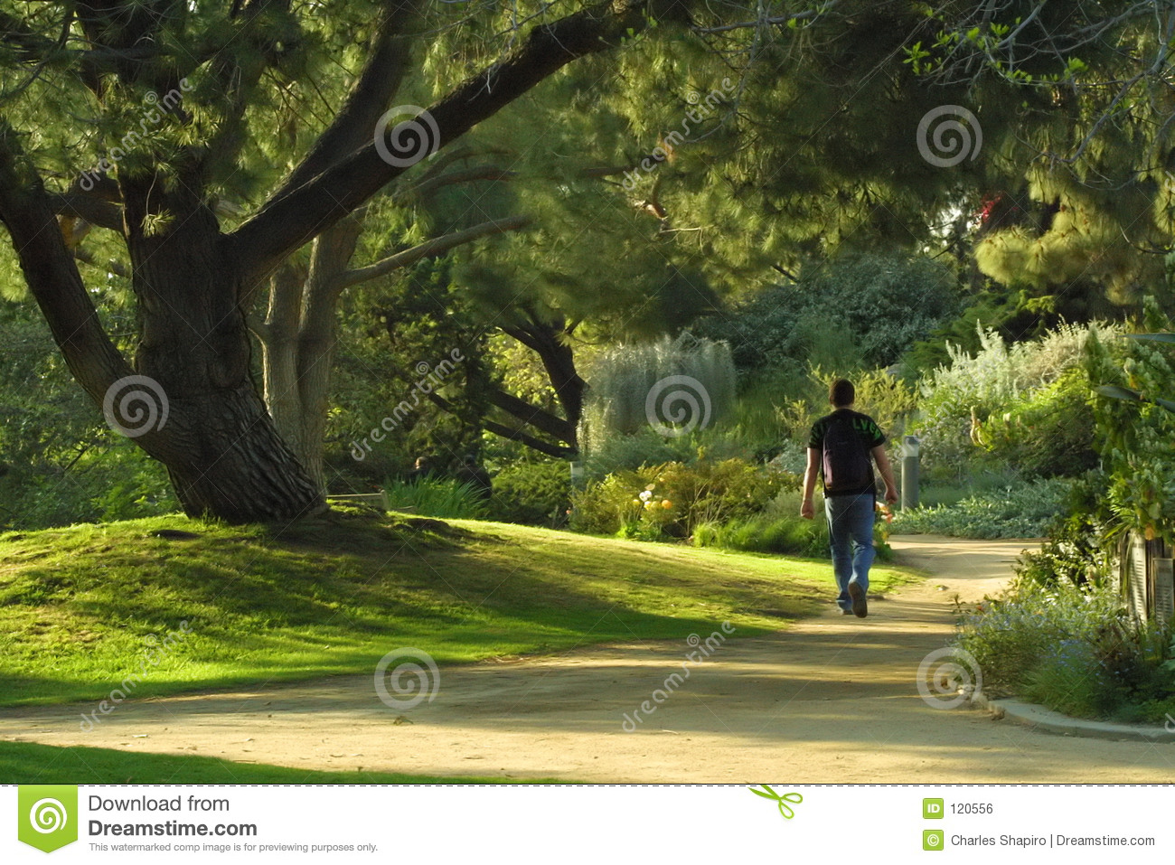 Download Walk in the park stock photo. Image of nature, green, terrain - 120556