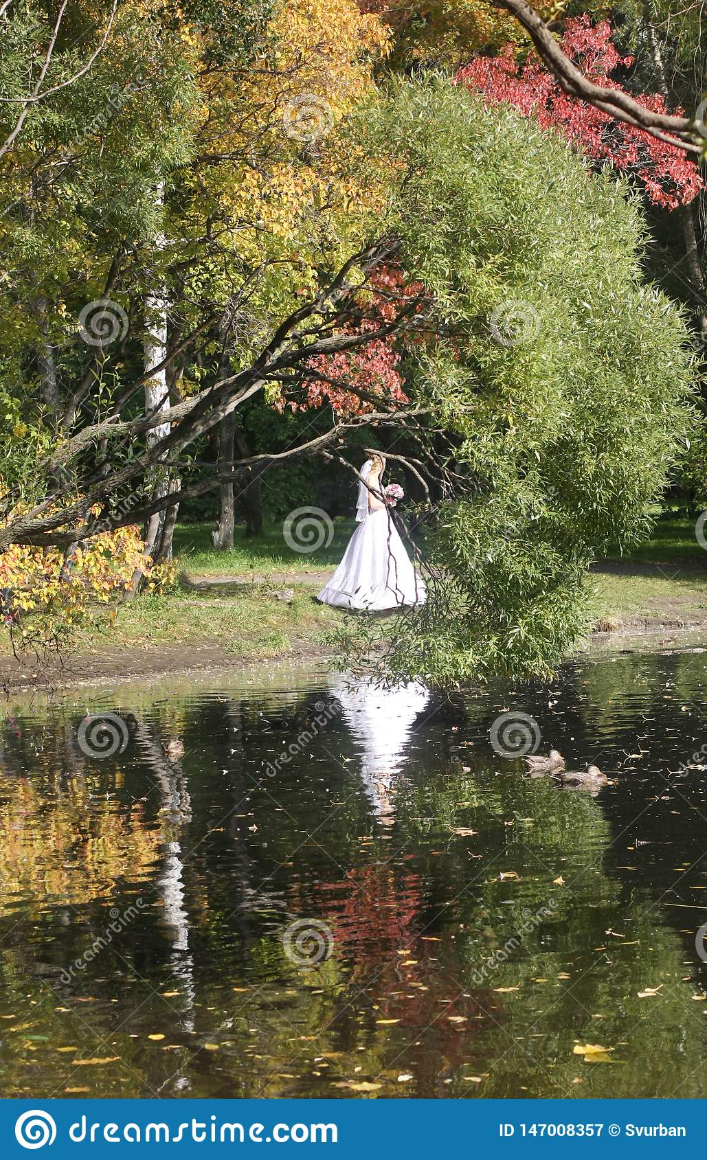 Walk in the park in the fall. reflection in water. Bride