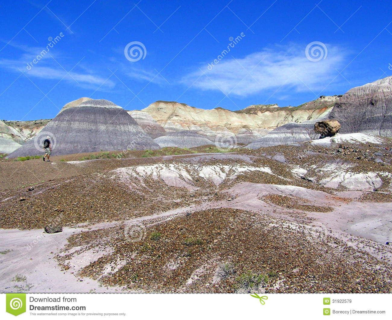 meet petrified forest natl pk singles This is part of a series, planet terra, which when licensed allows you to add your own custom narration to meet you specific marketing needs contact us at t.