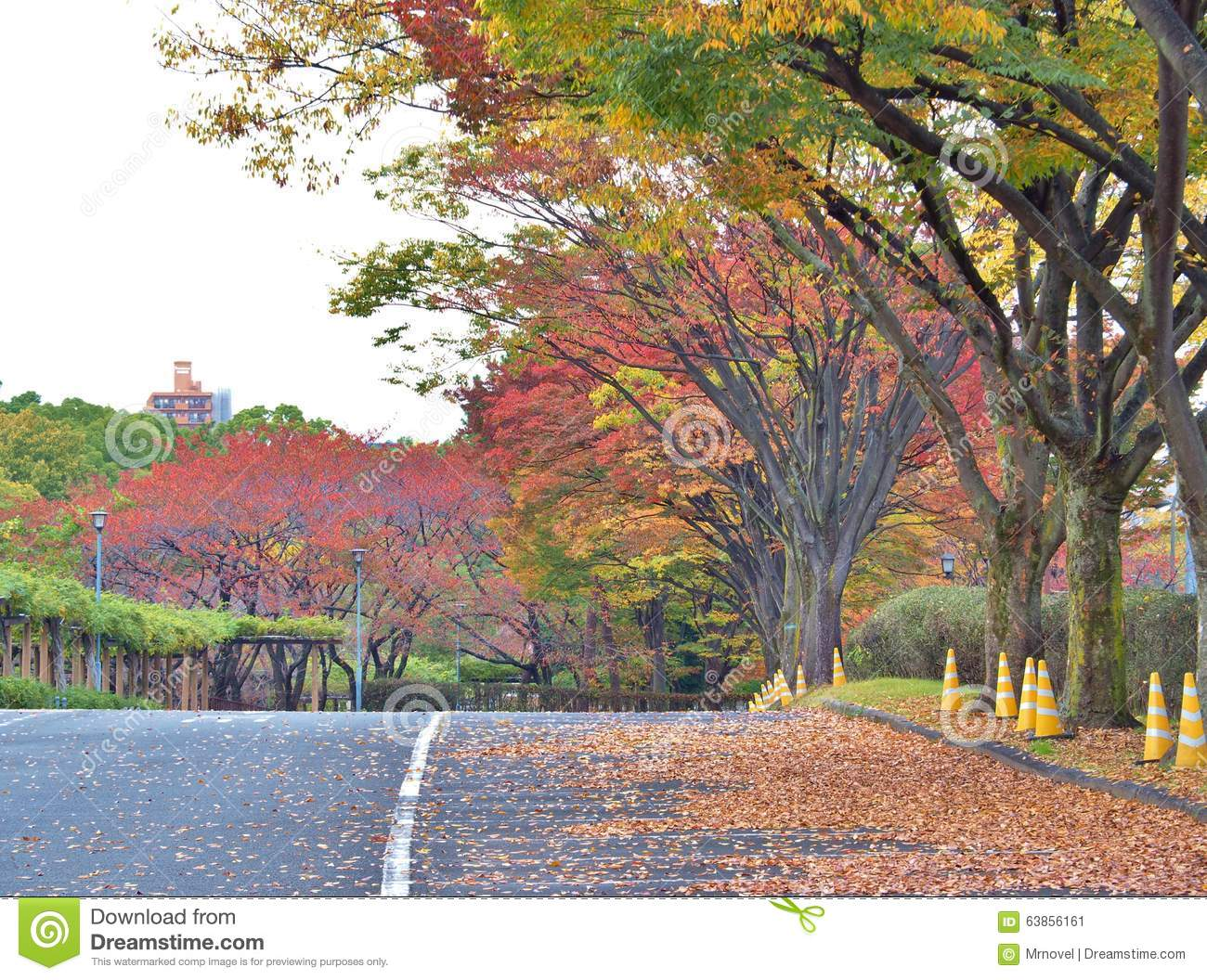 Walk way in Autumn at Nagoya, Japan.
