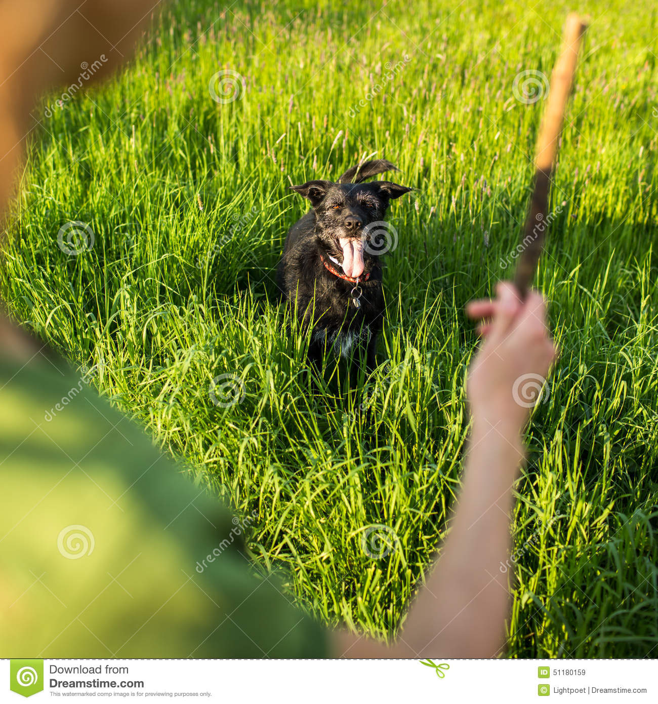 Walking the dog - throwing the stick to fetch