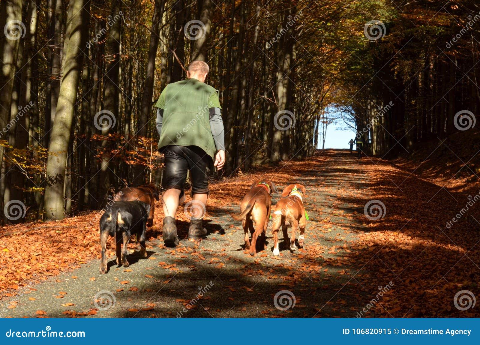 Walking the dogs, forest path in Czech Republic