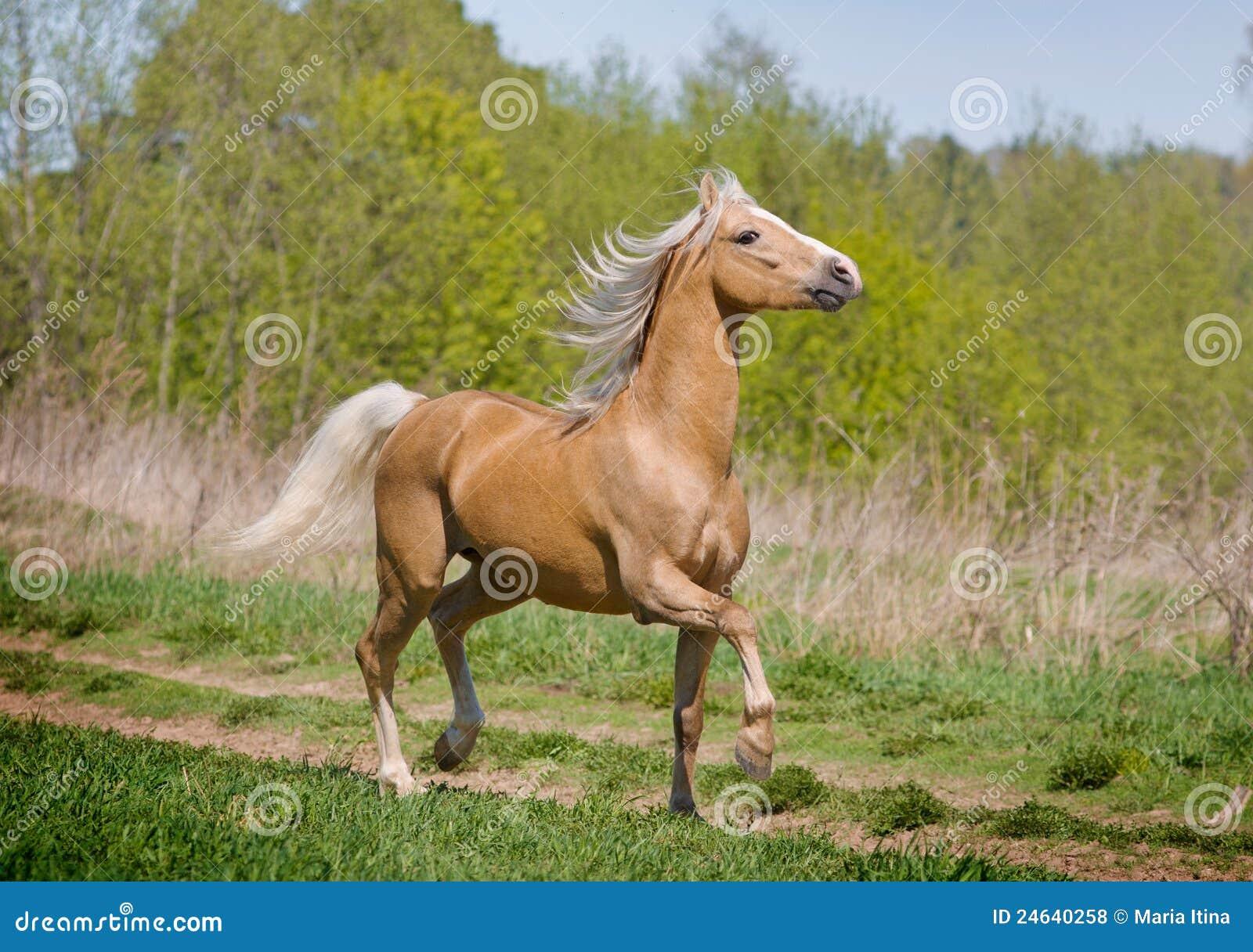 Walking Horse Royalty Free Stock Photos - Image: 24640258