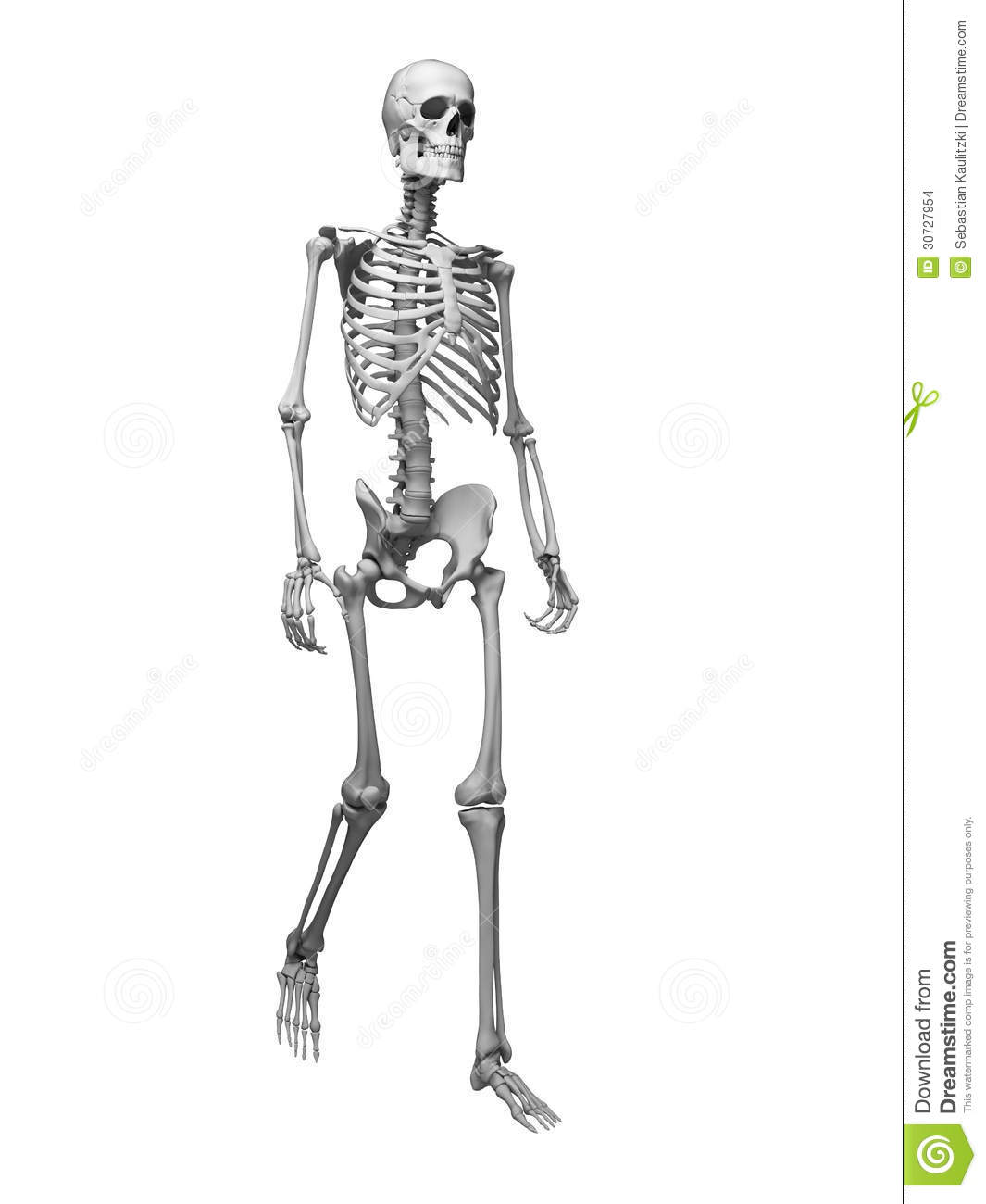 walking skeleton stock images - image: 30727954, Skeleton