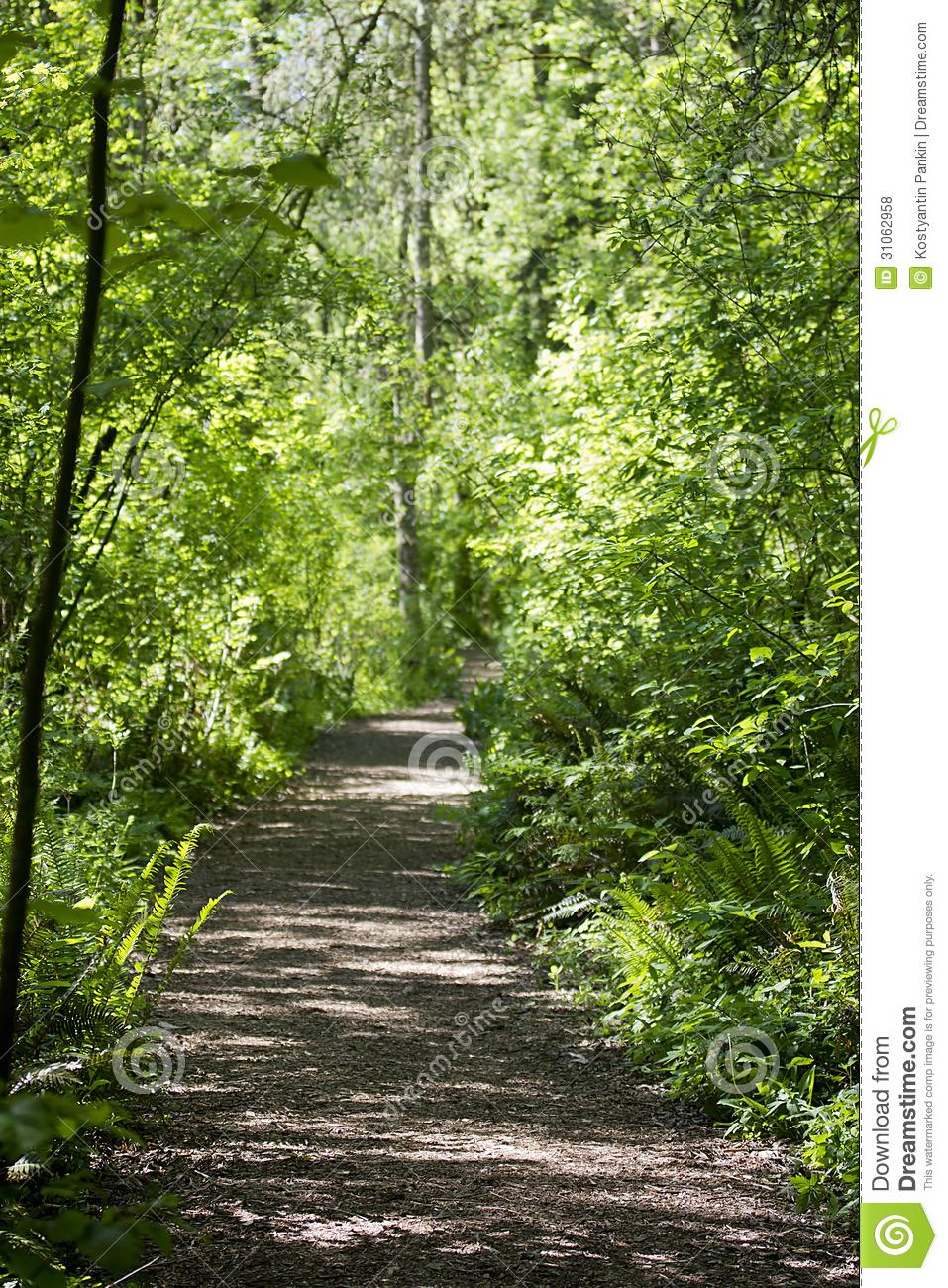 Walking Trail In The Woods Royalty Free Stock Photos ...