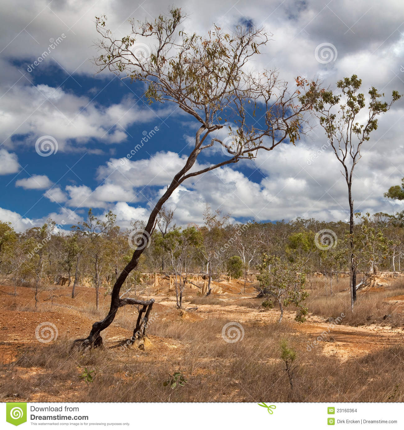 Walking Tree Soil Erosion By Overgrazing Stock Images