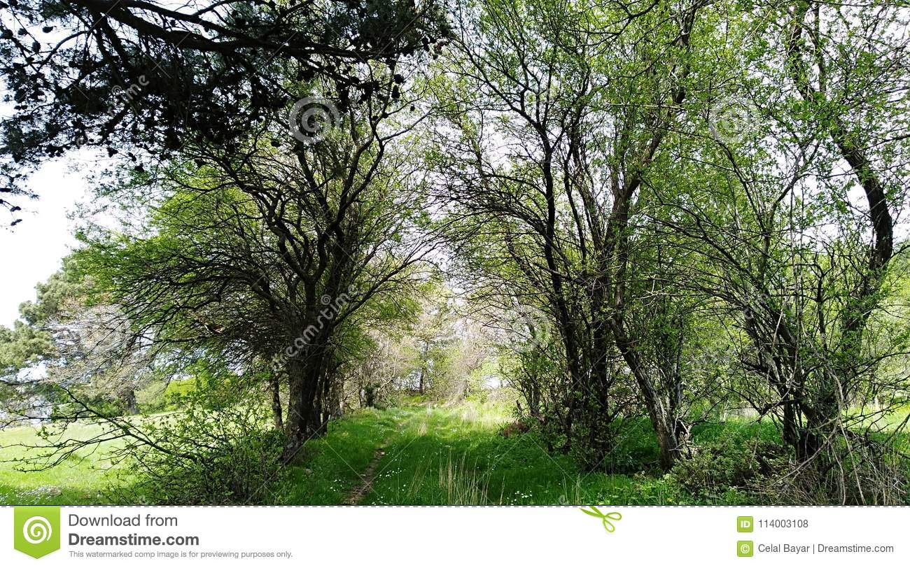 Trees and fresh grass