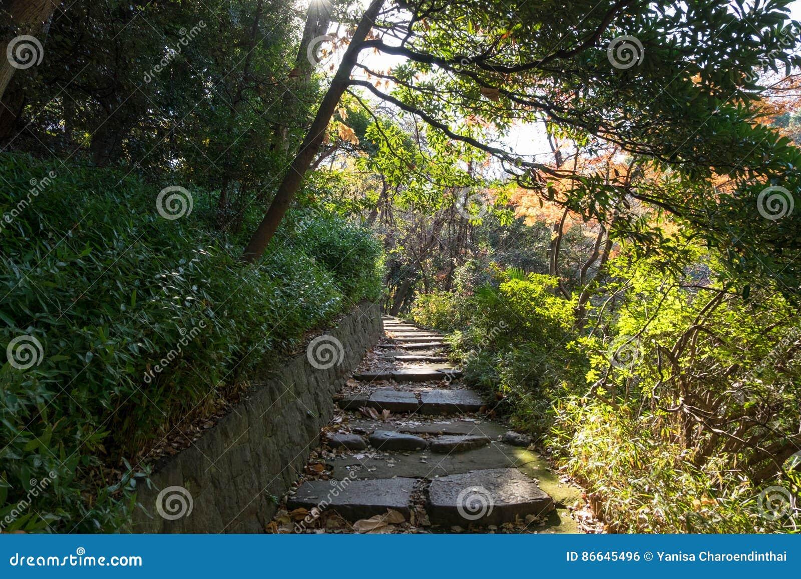 Etwas Neues genug Walkpath Und Steintreppe Im Garten Stockfoto - Bild von kühl, pfad &PA_59