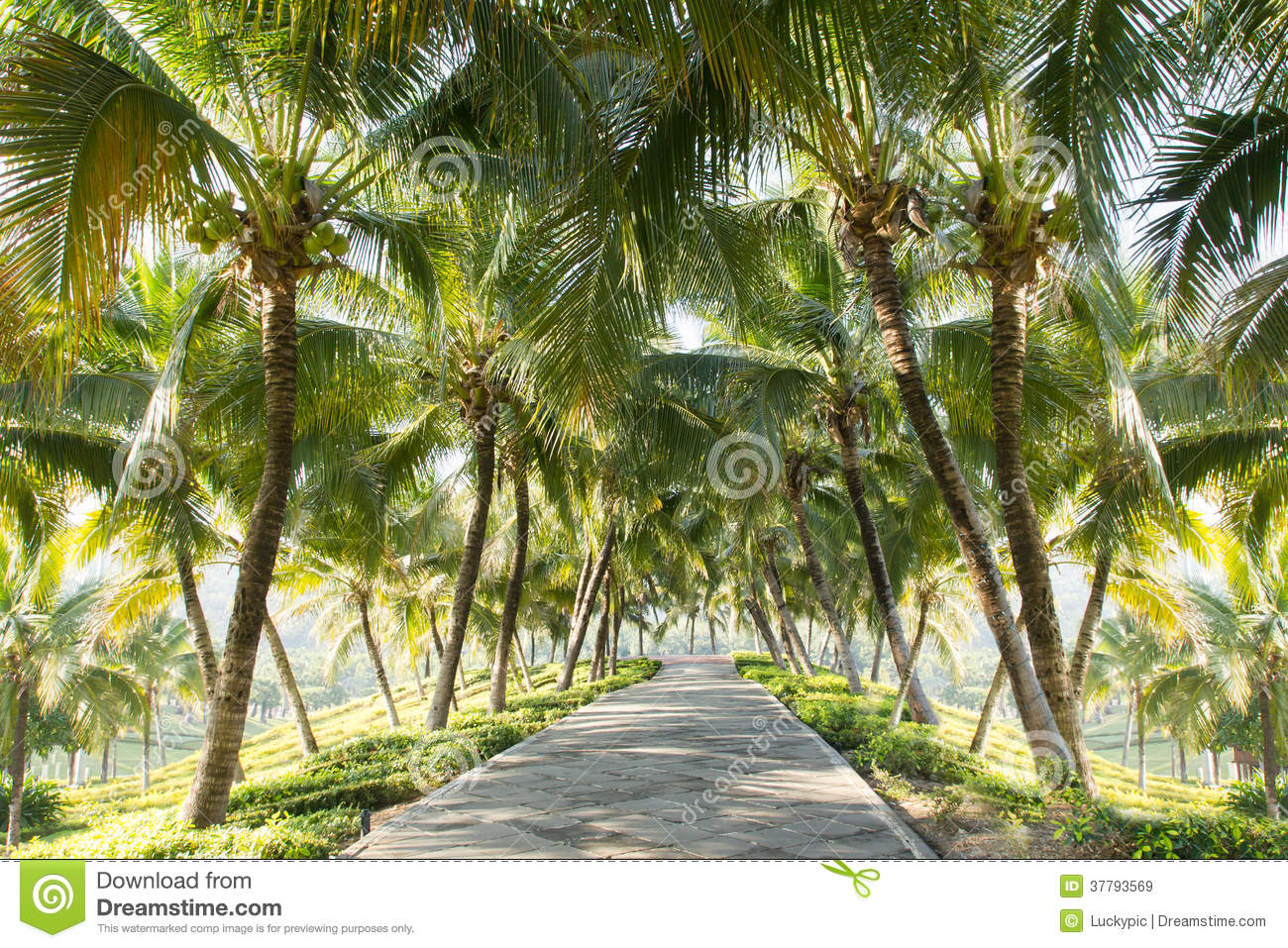 walkway with coconut tree in the garden stock image image of path road 37793569. Black Bedroom Furniture Sets. Home Design Ideas