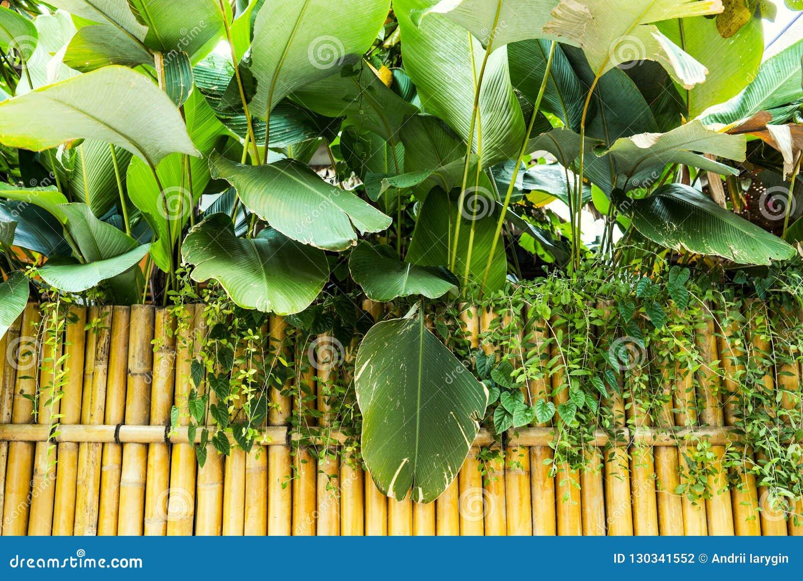 Wall Bamboo Japanese Garden Stock Photo Image Of Garden