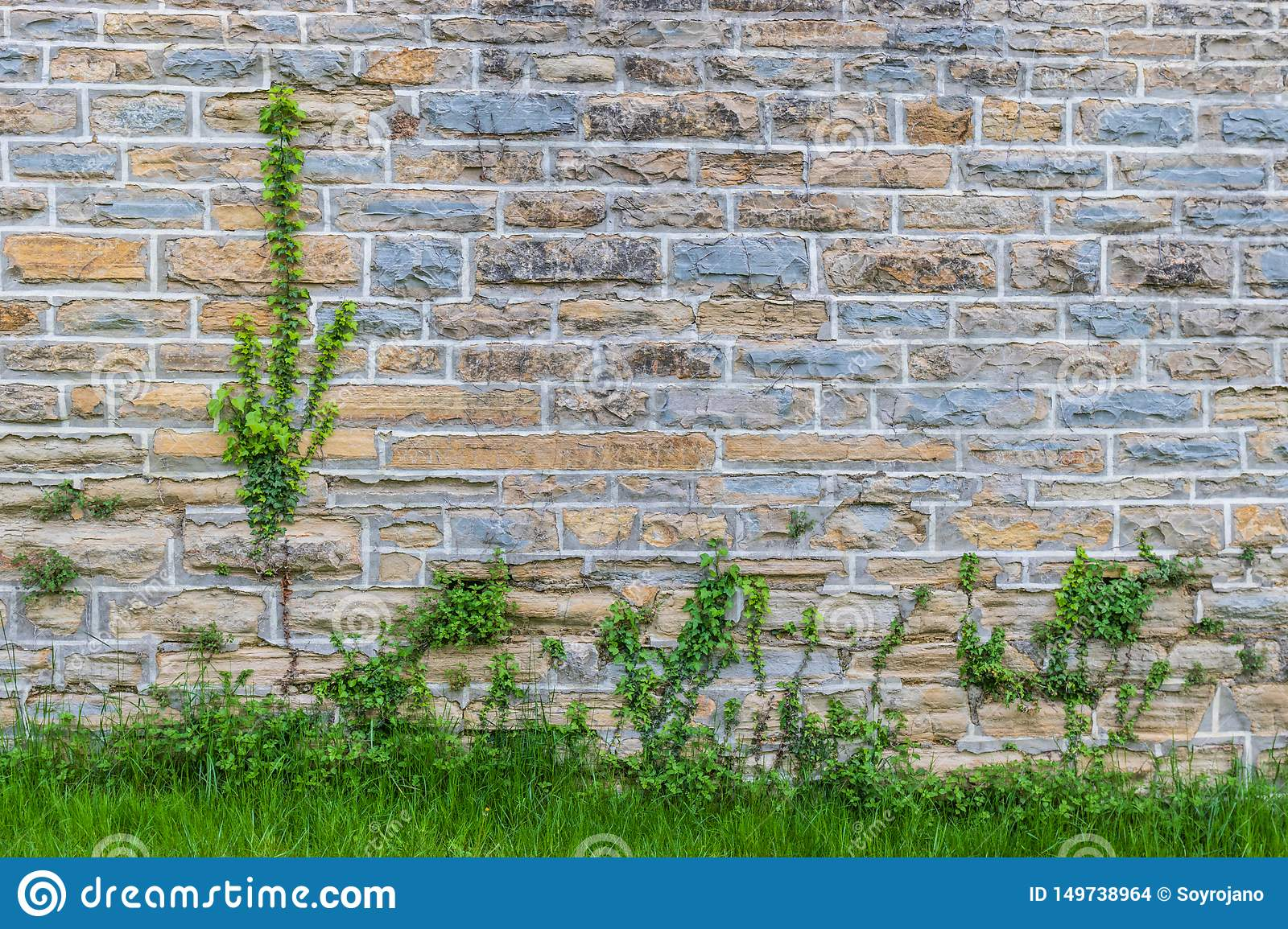 Wall with colored bricks & plants