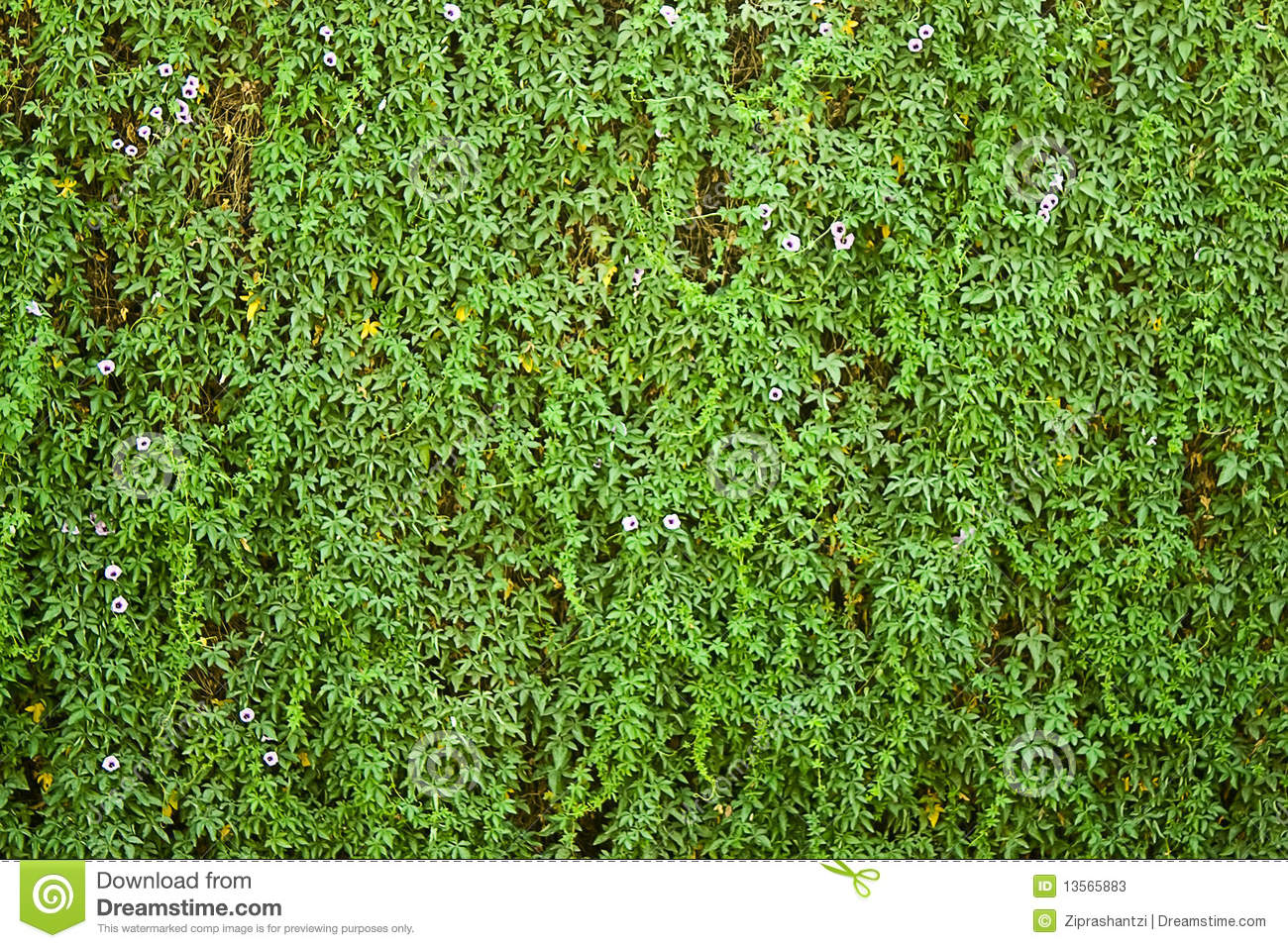 Wall Covered With Greenery And Flower Stock Photos Image 13565883