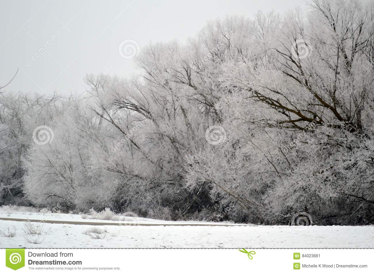 Wall of frost covered trees
