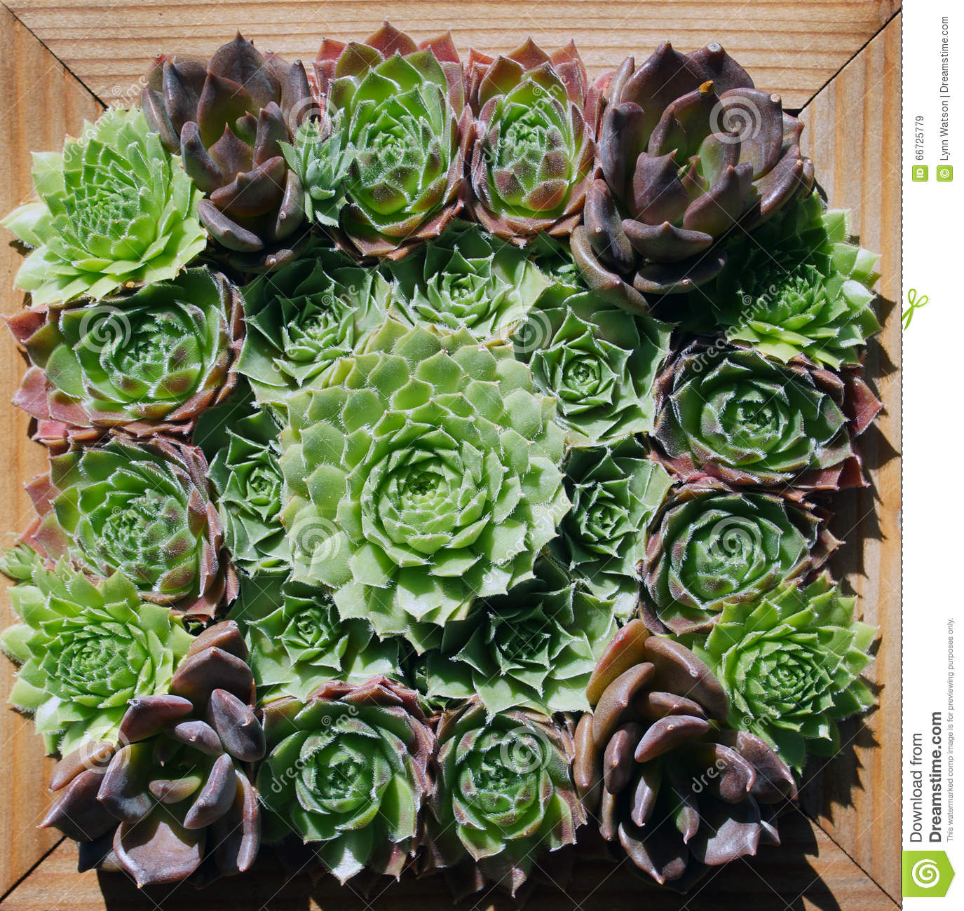 Wall Hanging Of Green Succulent Plants Stock Image - Image of ...