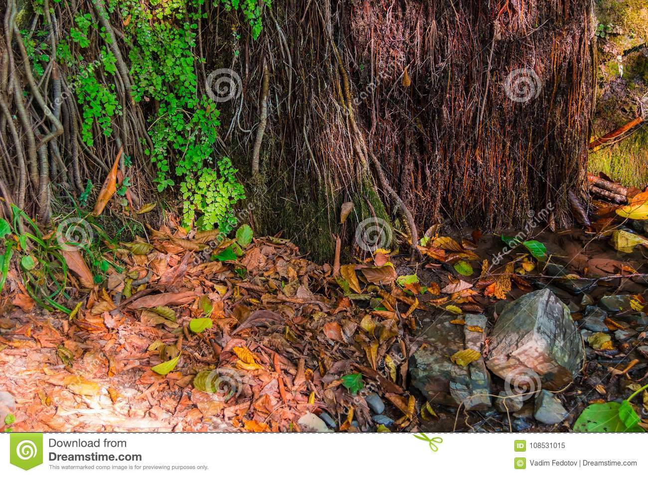 Wall Of Mountain With Vegetation And Dry Leaves On Ground
