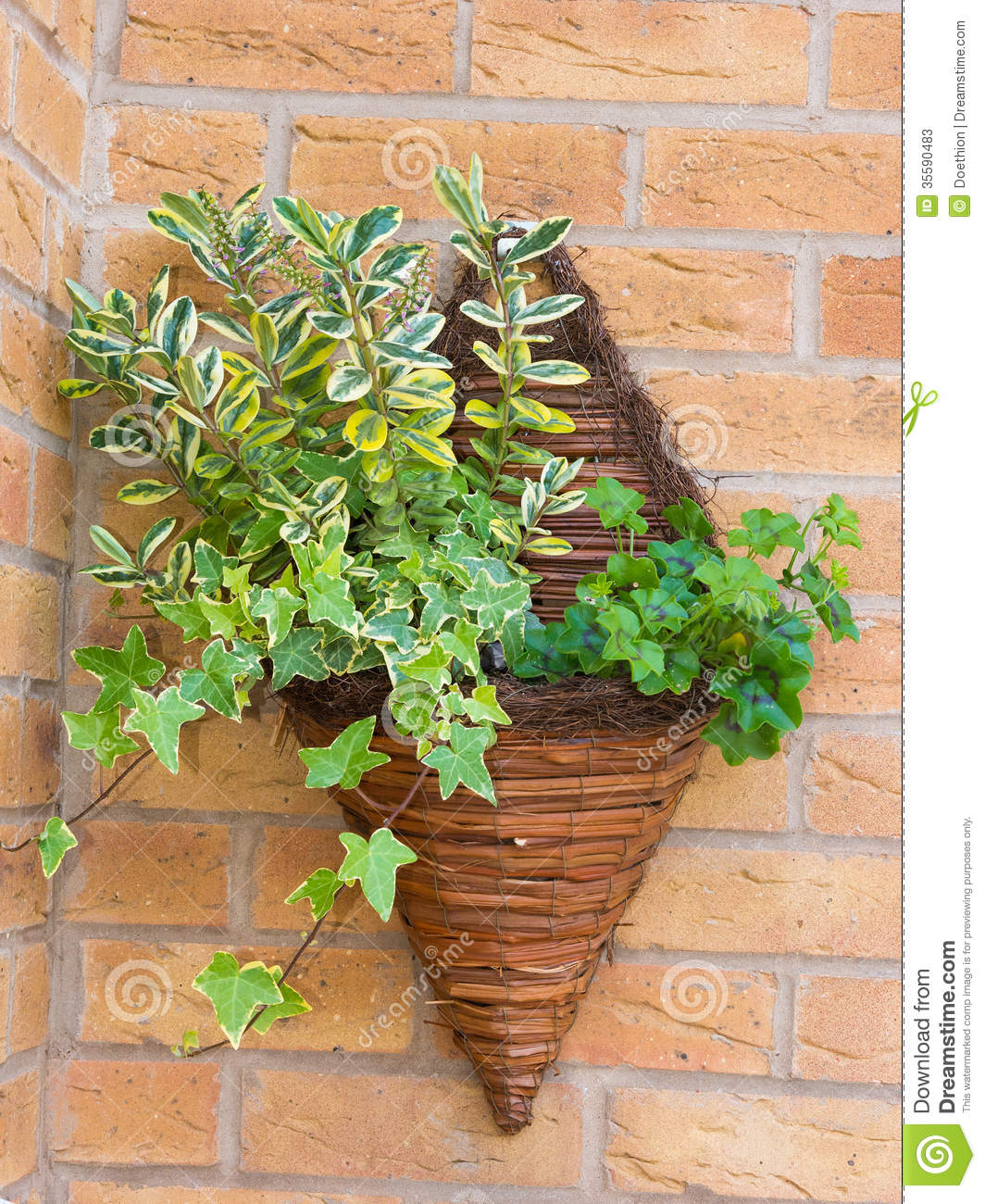Wall Mounted Wicker Basket Containing Plants