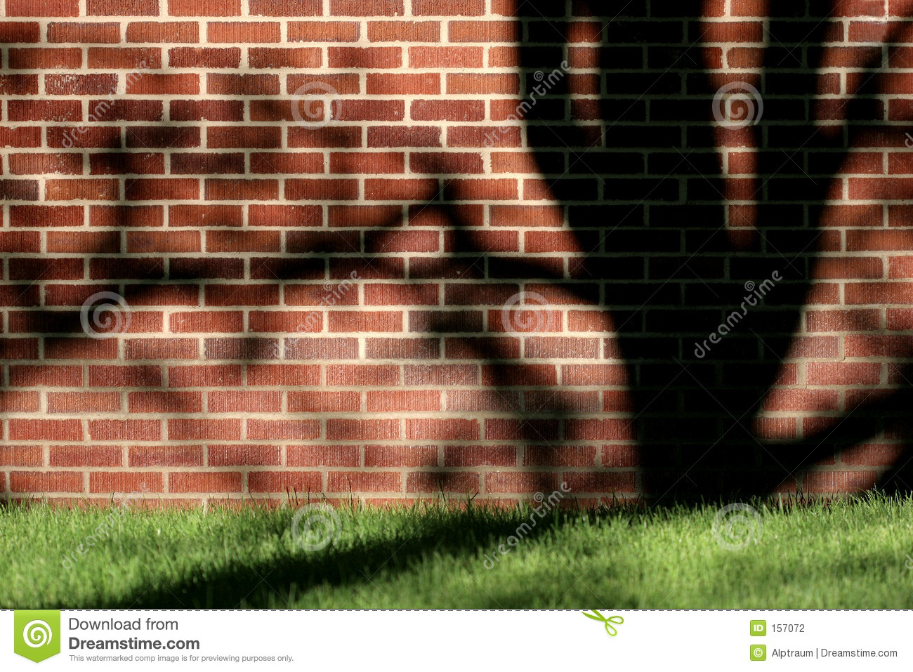 Wall, tree, and shadow