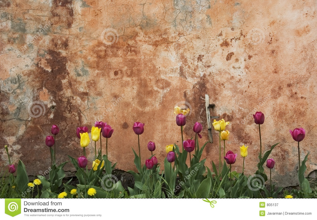 Wall and tulips