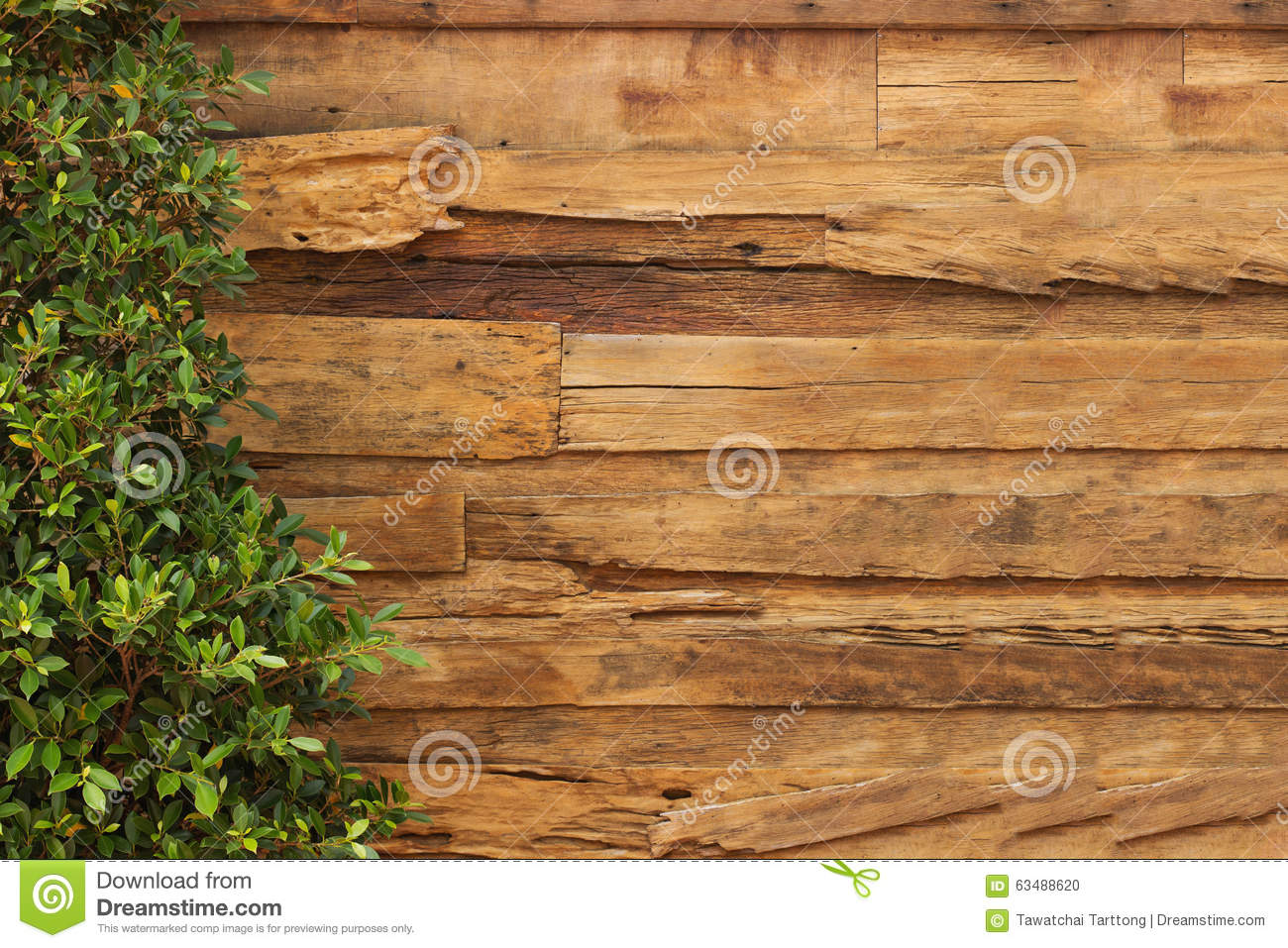 Wall Wood Texture And Plant Stock Photo Image 63488620