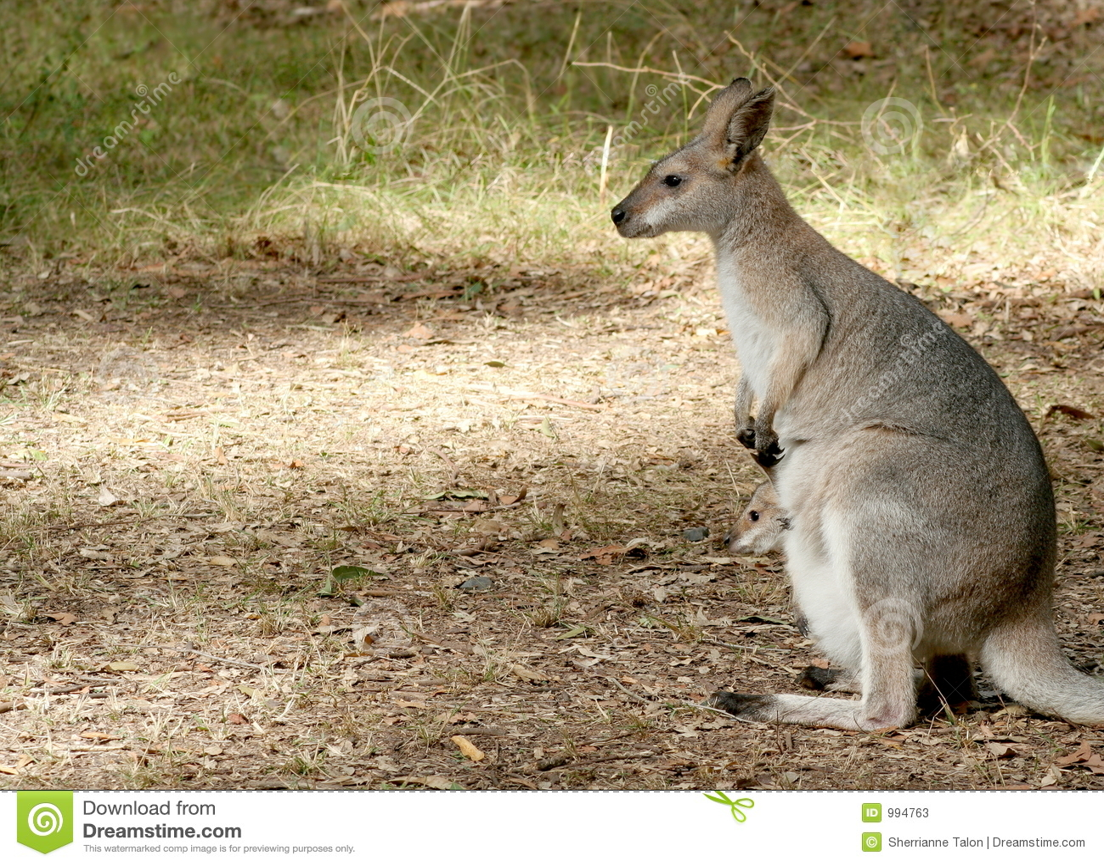 Wallaby en Baby