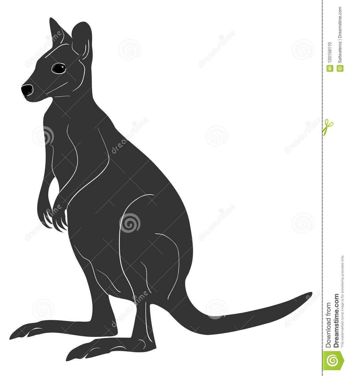 Wallaby Stock Illustrations 2 458 Wallaby Stock Illustrations Vectors Clipart Dreamstime