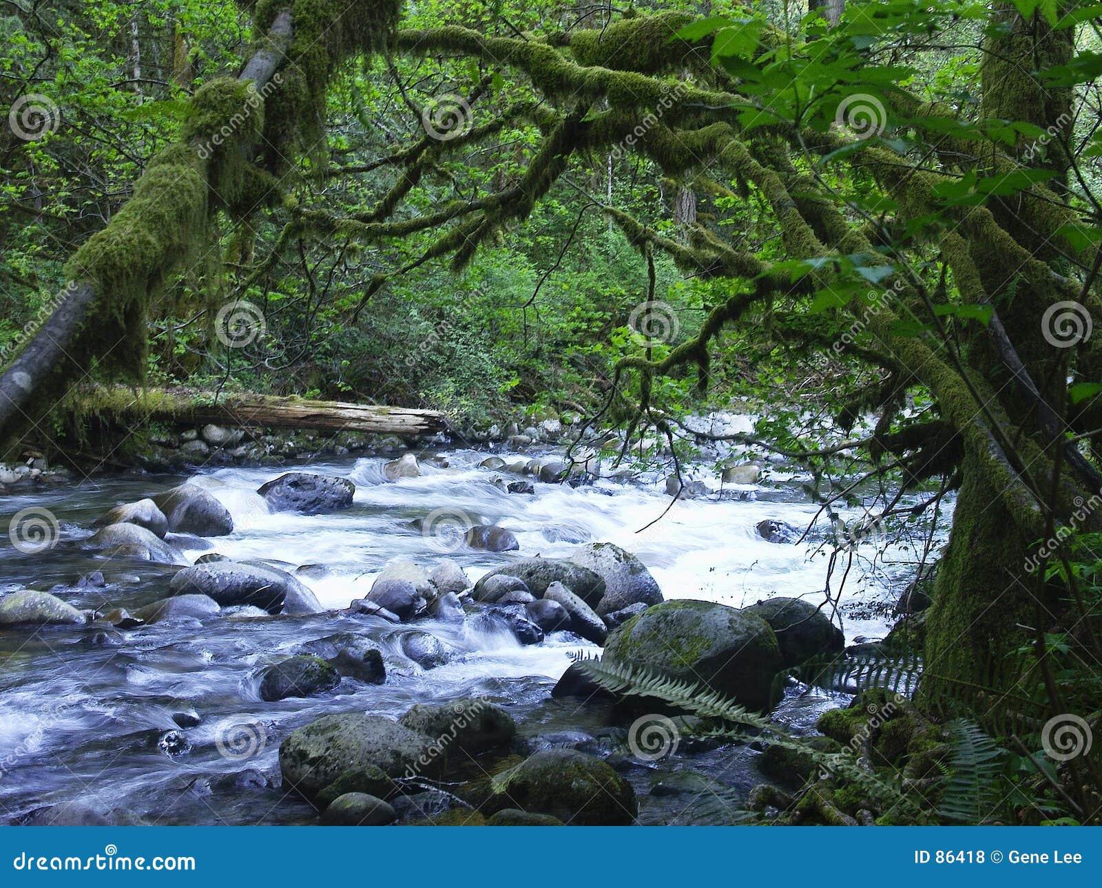Wallace rzeki