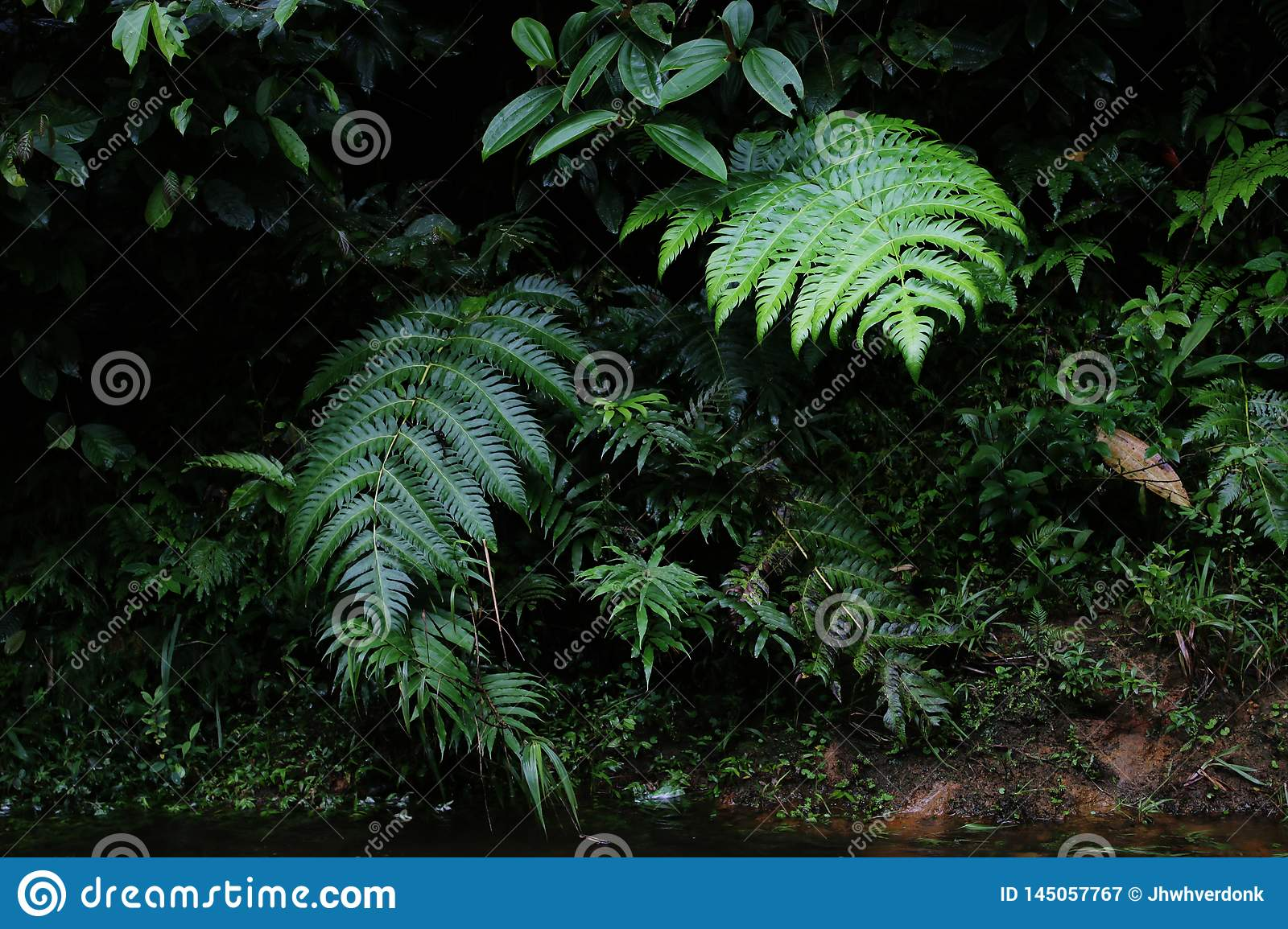 A Wallpaper Or Background Of Lush Jungle Or Tropical Forest
