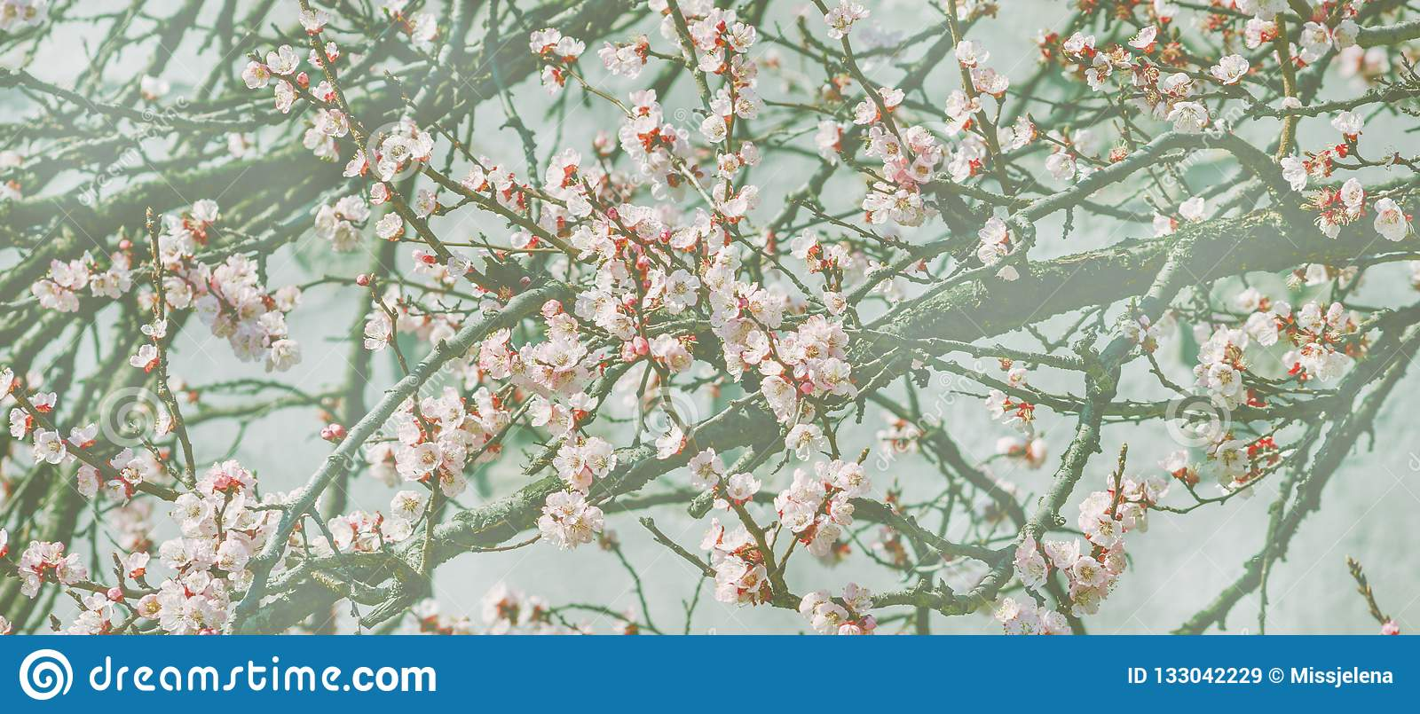 Wallpaper With Cherry Blossom Branch In Japanese Garden In