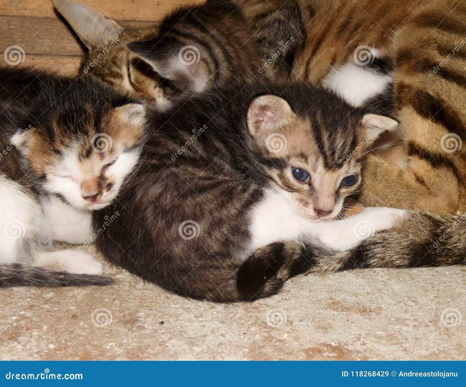 Wallpaper Con Il Primo Piano Di Un Gatto Della Madre E Del Suo Sonno