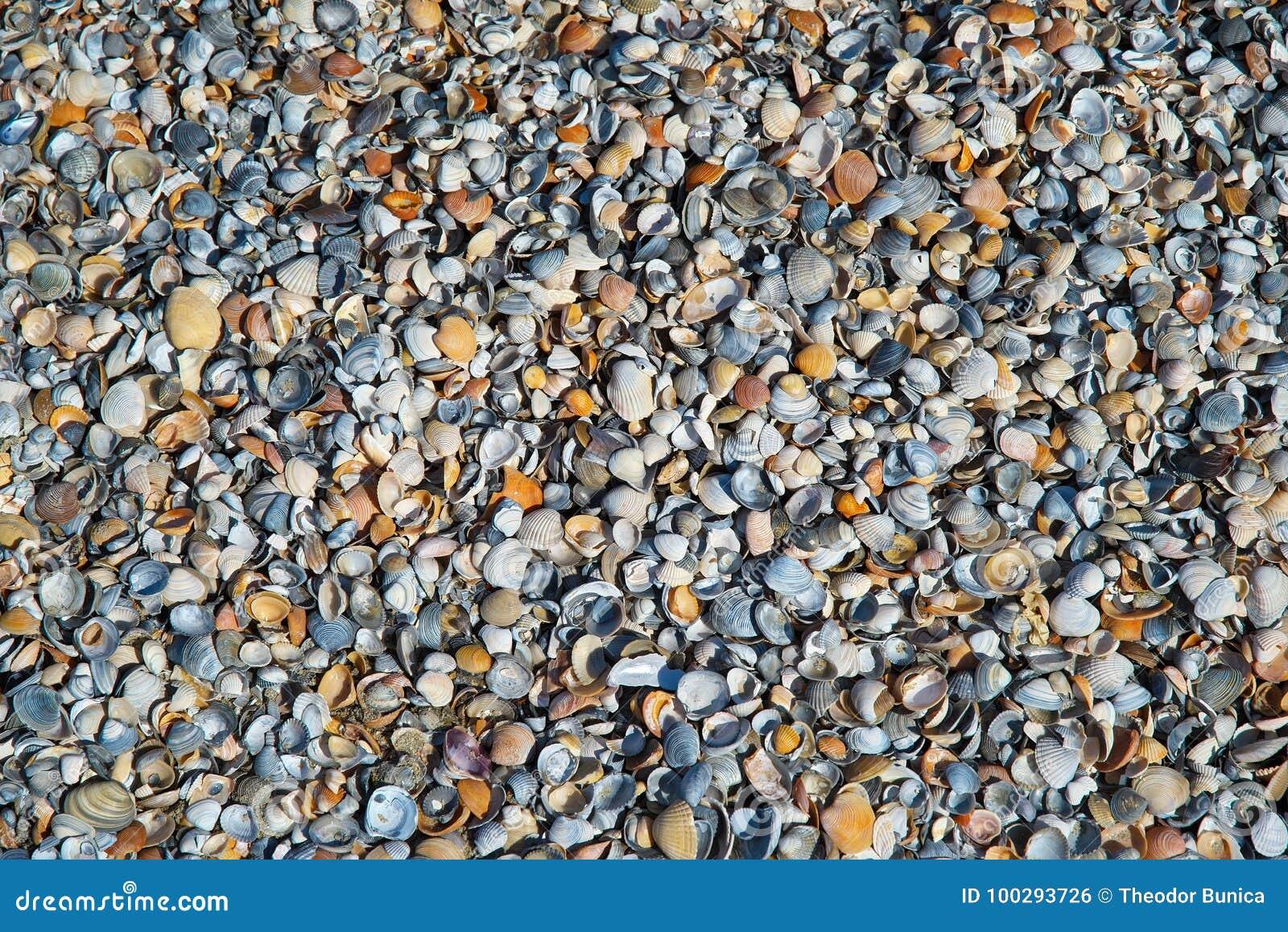 Wallpaper Fundo com shell coloridos