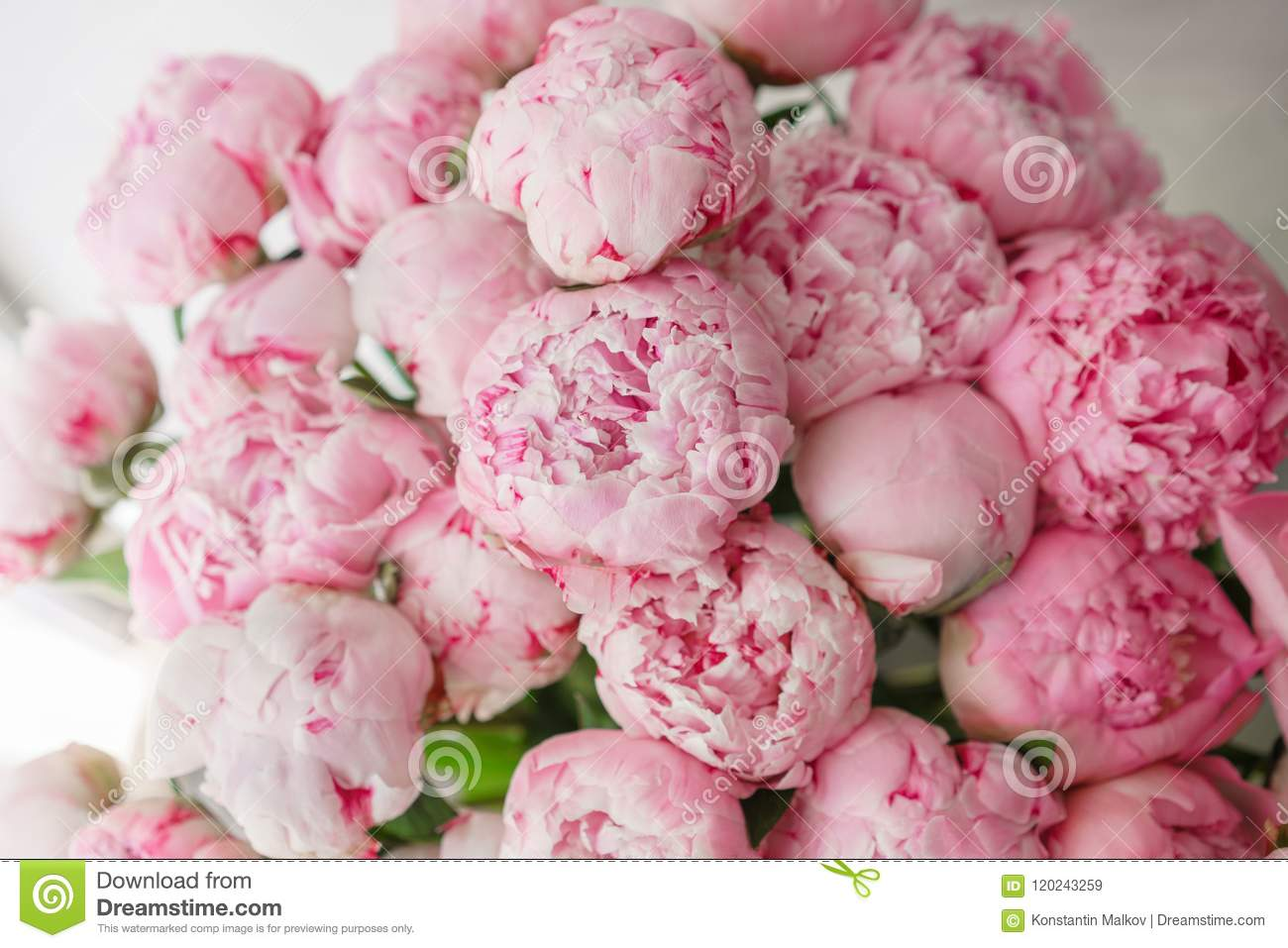 Wallpaper Lovely Flowers Pink Peonies Floral Compositions