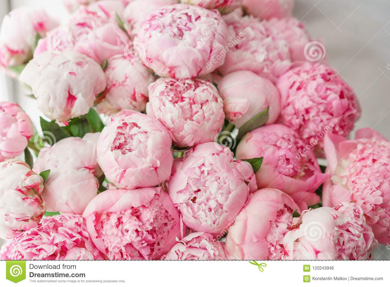 wallpaper. lovely flowers pink peonies . floral compositions