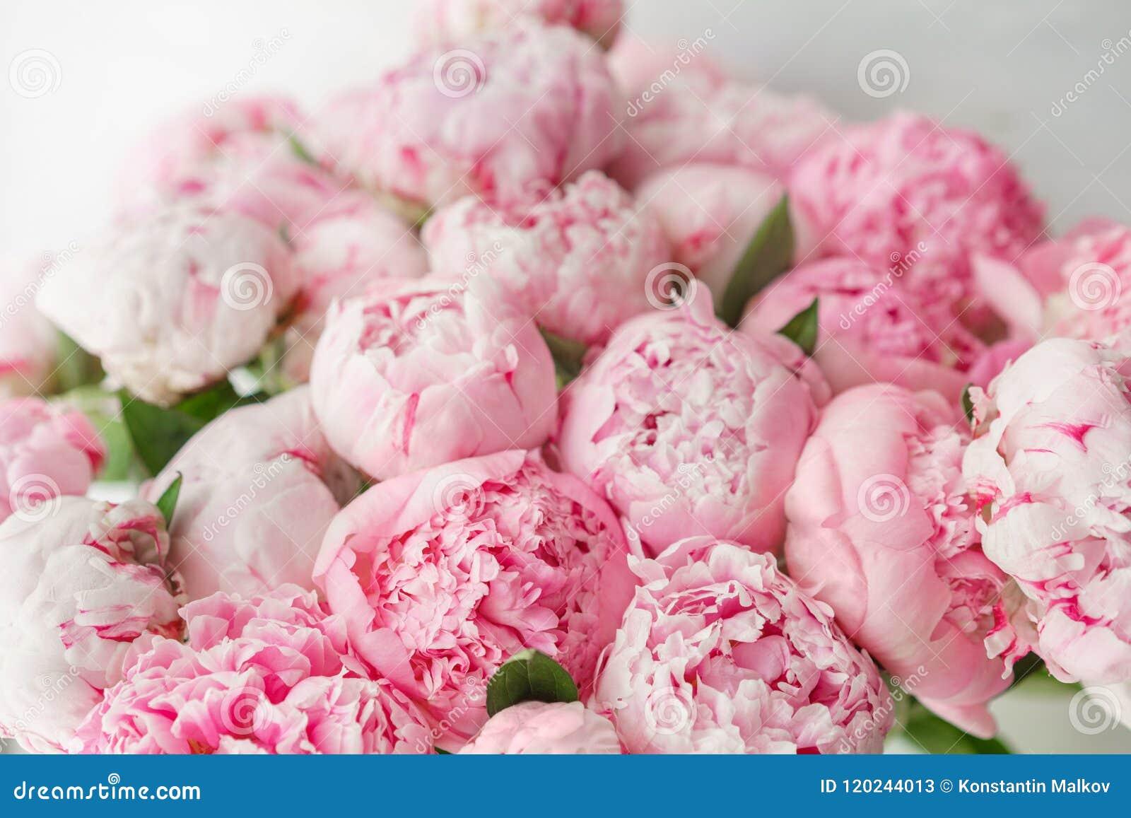 Wallpaper Peonías rosadas de las flores preciosas Composiciones florales, luz del día