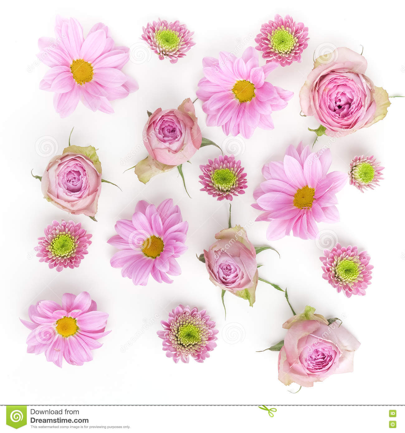Wallpaper Texture Pink Flowers On White Background Flat Lay Top