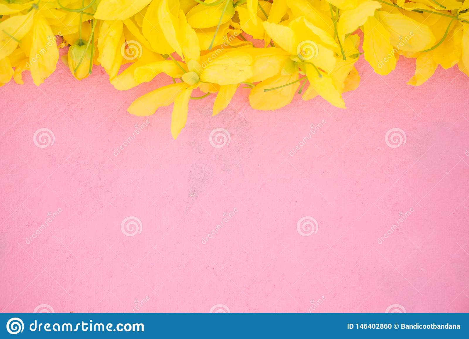 Wallpeper close up nature Yellow flower on pink background