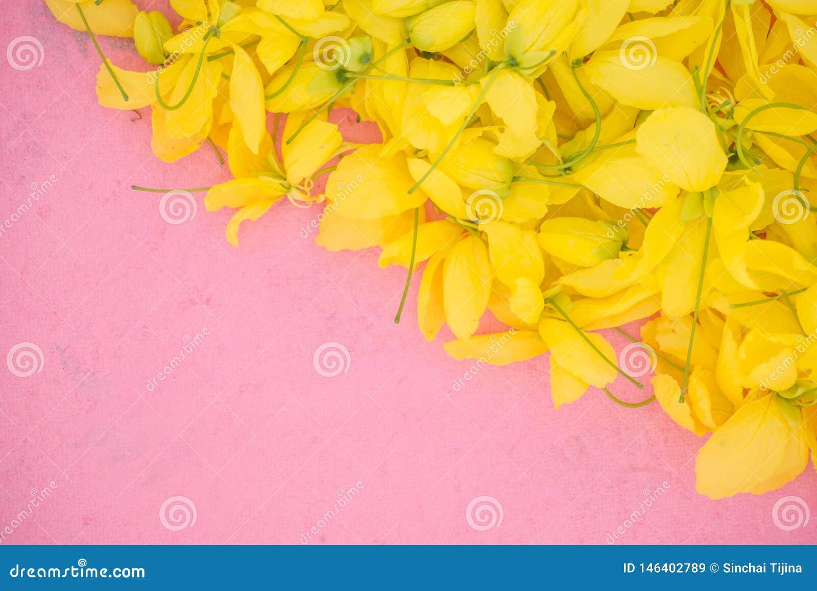 Wallpeper slut upp den gula blomman för natur på rosa bakgrund