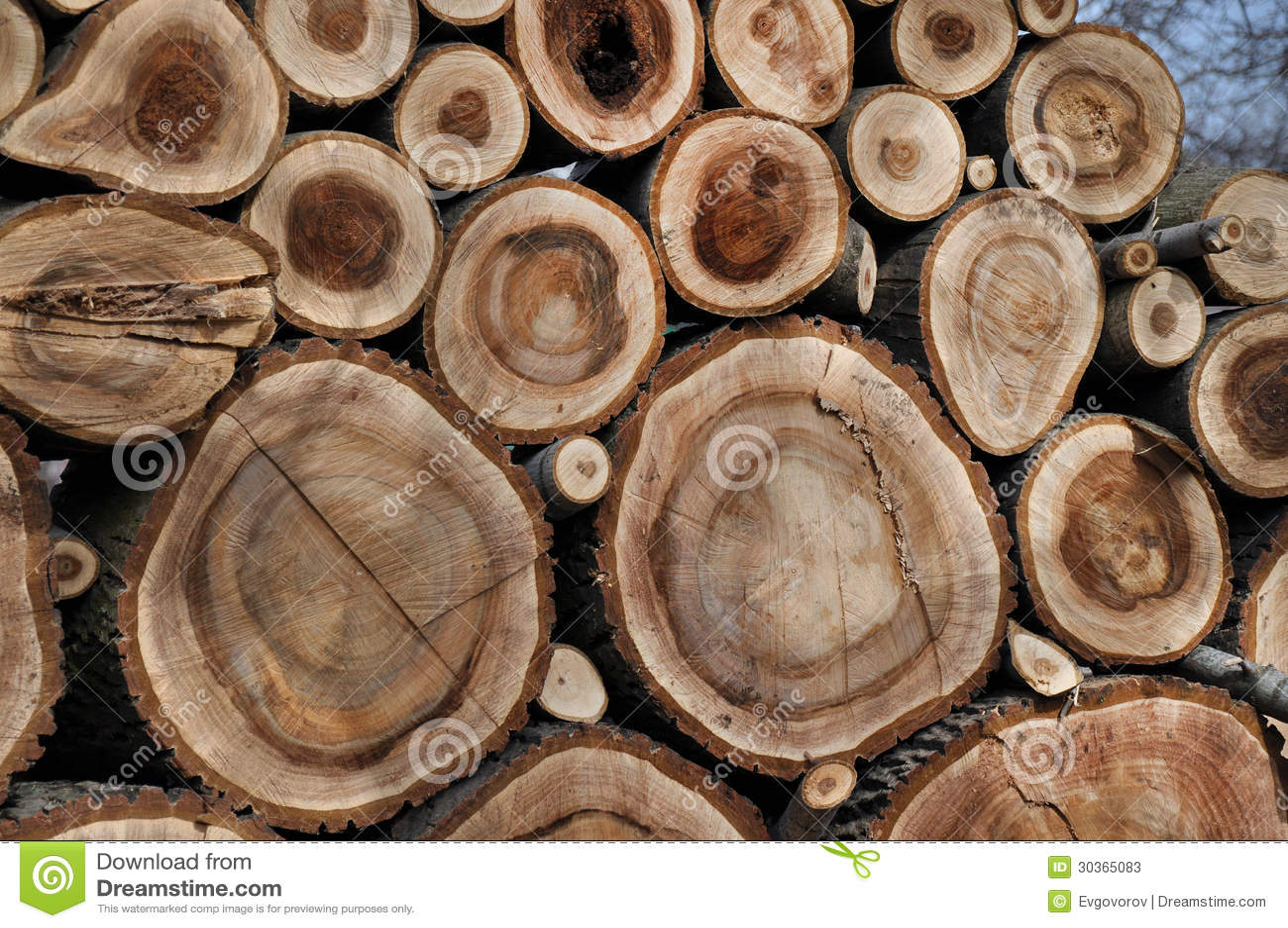 walnussholz stockbild bild von baum holz farbe kreis 30365083. Black Bedroom Furniture Sets. Home Design Ideas