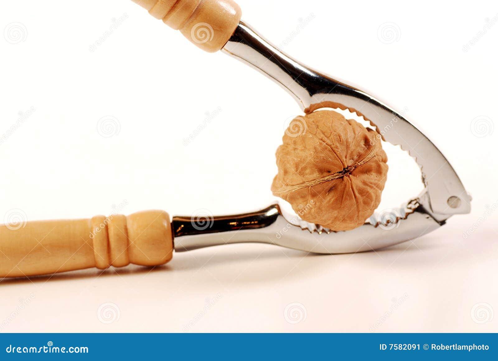 Walnut Stock Image - Image: 7582091