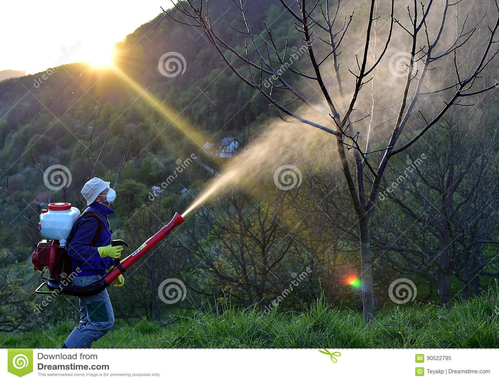 Walnut Blight Spraying