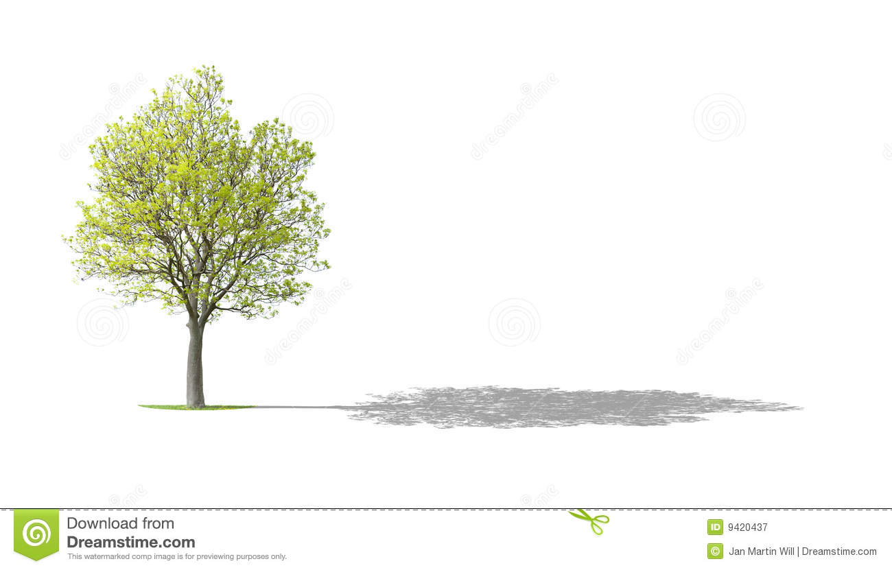 how to draw a shadow of a tree