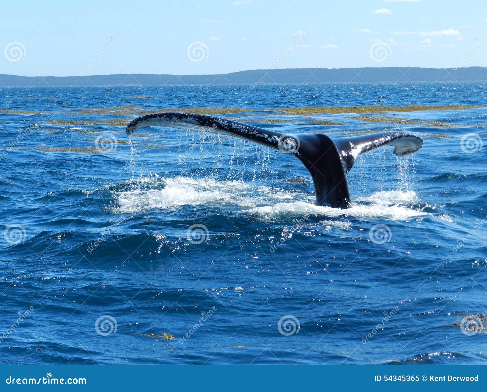 Walvis van een Verhaal