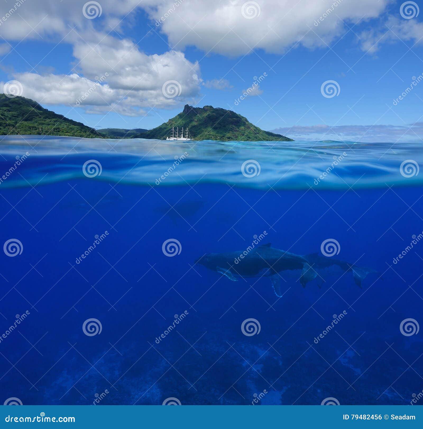 Walvissen onderwaterspleet met eiland bij de horizon