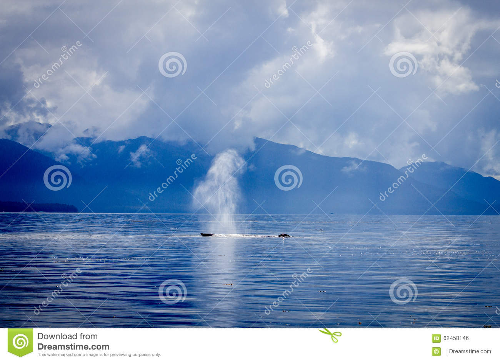 Walvisslag