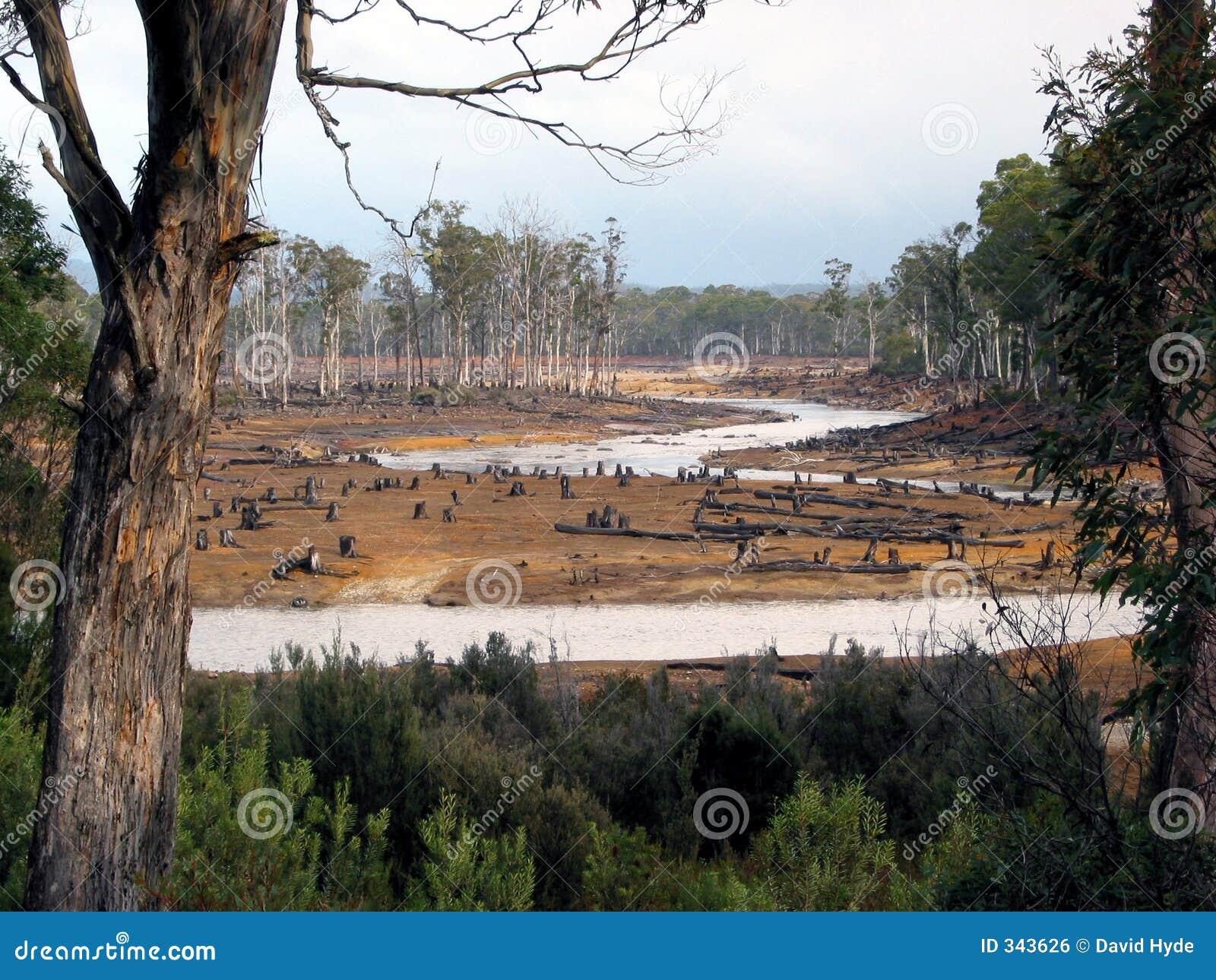 Wandalizm tasmańskie ekologicznej lasów