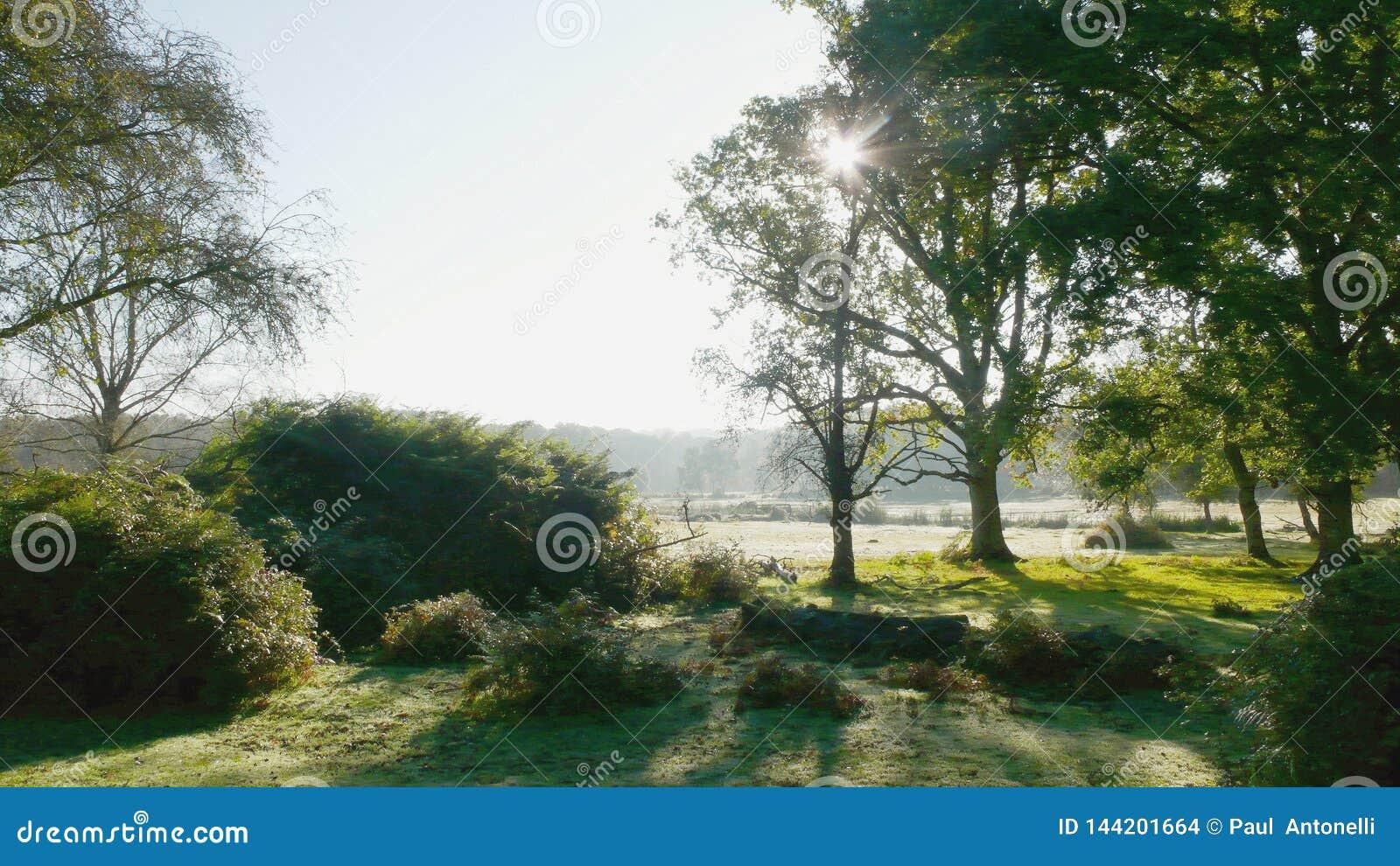 Wandelend het Nieuwe Bos