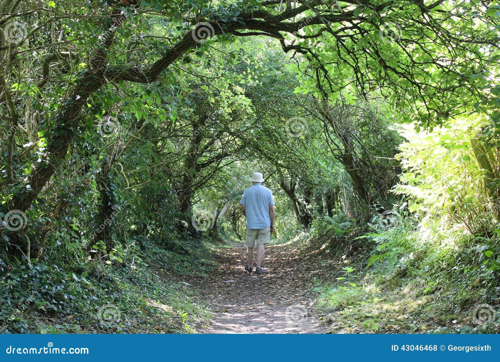 Wanderer auf dem Fußweg gestaltet durch Bäume am Sommertag