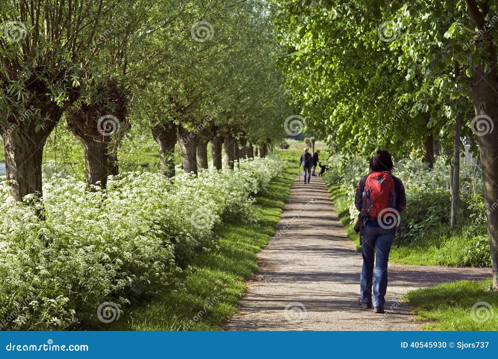 Wanderer, der zwischen Blumenpracht, die Niederlande geht
