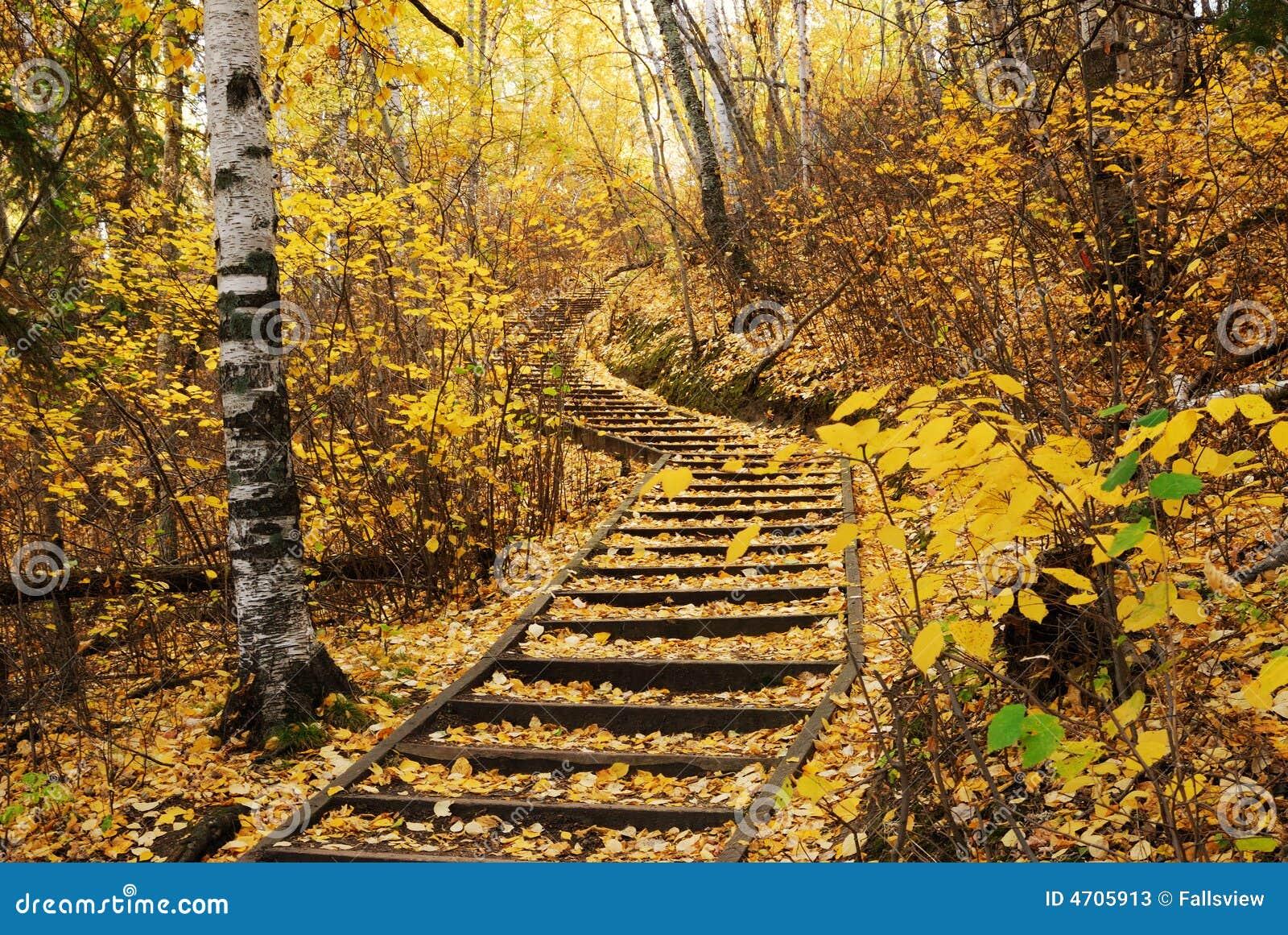 Wandernde Spur im Herbstwald
